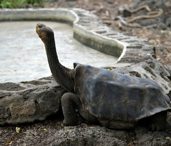 Covid-19 brings tourism, science to a halt on Galapagos Islands