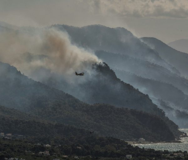 Greek firefighters hopeful of containing forest blaze