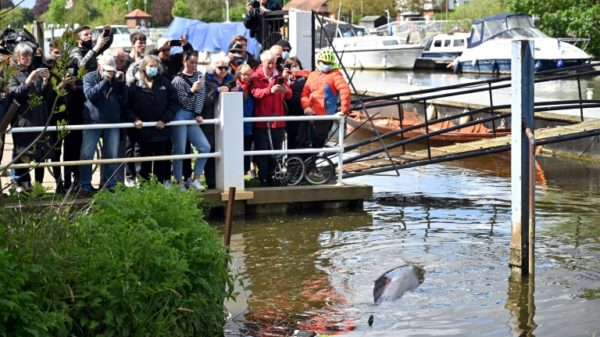 Fears for whale stranded in London's Thames