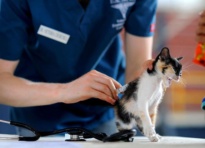 Russia begins vaccinating pets for COVID-19
