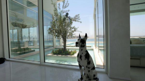 Dubai property booms as wealthy buyers escape lockdowns