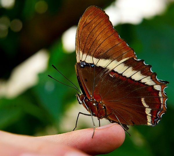 Colombia has the world's largest variety of butterfly species: study