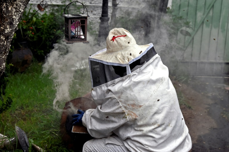 Mexico's bee guardians on mission to save species