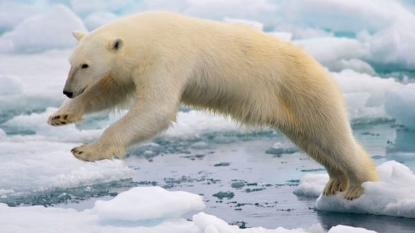 Arctic's 'Last Ice Area' may disappear earlier than expected