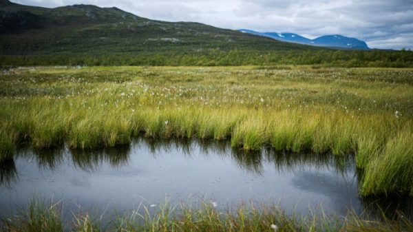 Permafrost: a ticking carbon time bomb