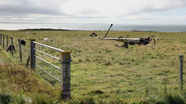 Orkney's seaweed-eating sheep offer hopes of greener farming