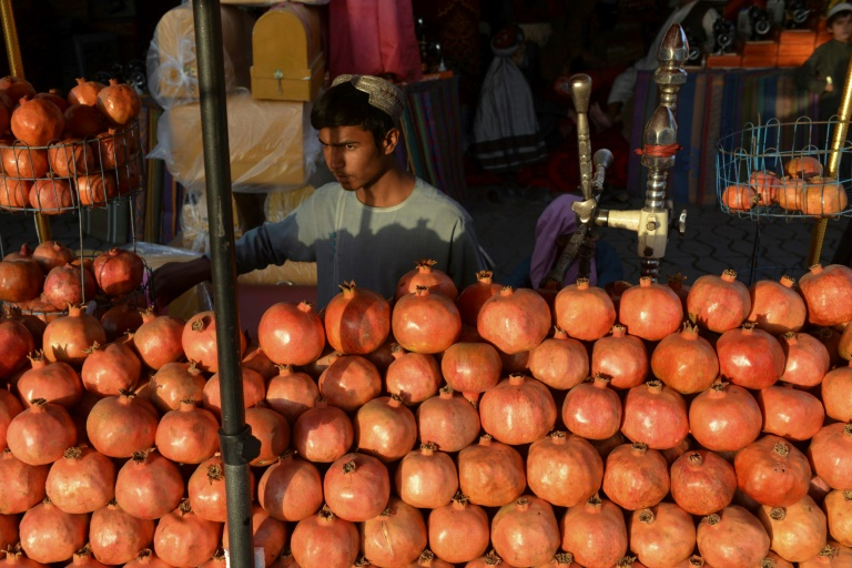Afghan pomegranate pickers jobless as fruits rot at shuttered border