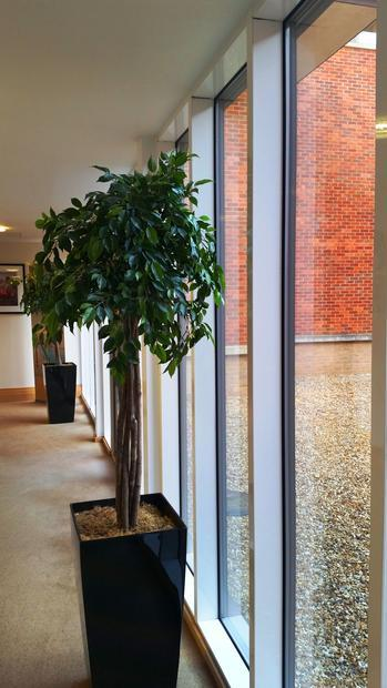A walkway at The Oxfordshire Hotel  with decorative plants.
