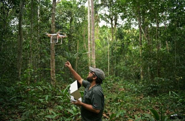Felipe Spina Avino  World Wildlife Fund (WWF) forestry conservation analyst  uses drones to map an a...