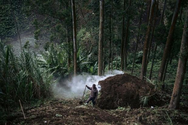 The WWF is among groups trying to minimise the impact of charcoal burning by introducing more effici...