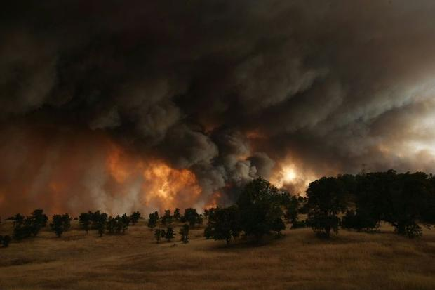 California's drought crisis has caused wildfires  decimated forests  threatened animal species ...