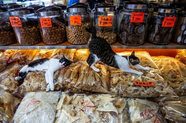 Cats at a dried seafood shop in Hong Kong. August 8 is International Cat Day