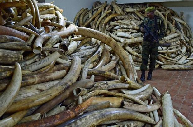 At its peak in 2014 wholesale prices for raw ivory stood at $2 100 (1 900 euros) per kg in Chinese m...
