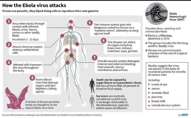 Factfile on Ebola