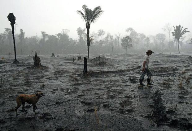 Raging fires and surging deforestation in the Amazon rainforest have focused international criticism...
