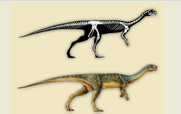 Profile and anatomical view of Chilesaurus  showing some of the dinosaur s unusual features.