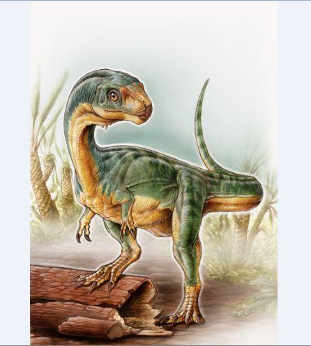 The enigmatic herbivorous theropod dinosaur Chilesaurus.