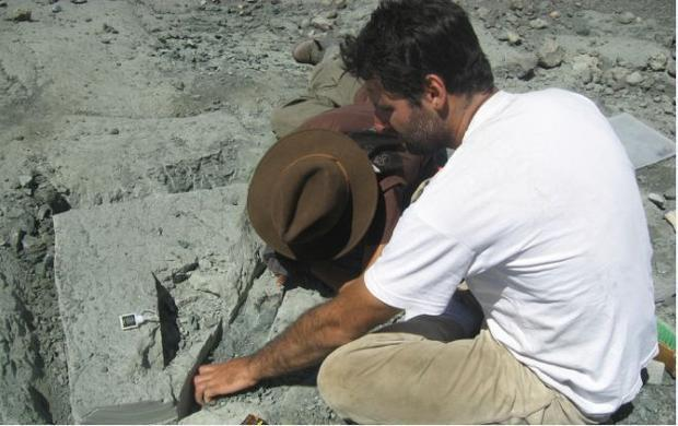 Excavating a skeleton from the beds of the Toqui formation in the southern Andes of Chile.