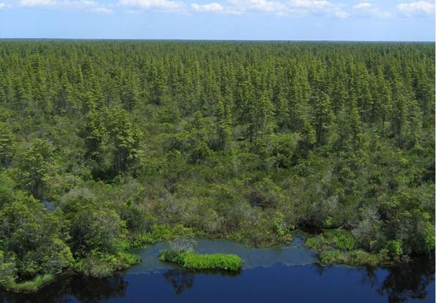Pocosin Lakes National Wildlife Refuge  North Carolina.