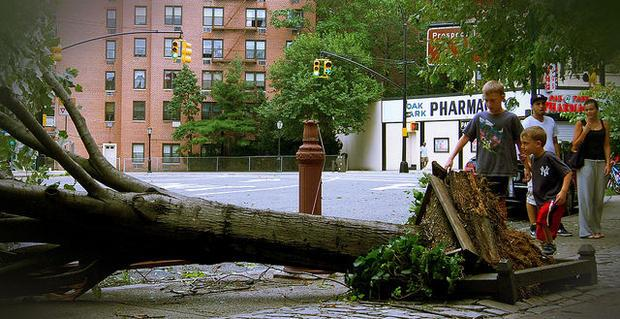 Hurricane Irene fells a tree in NYC  at Prospect Park West & 15th St.