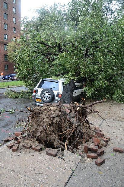 A car hit by an uprooted tree in the Bronx  after Hurricane Irene