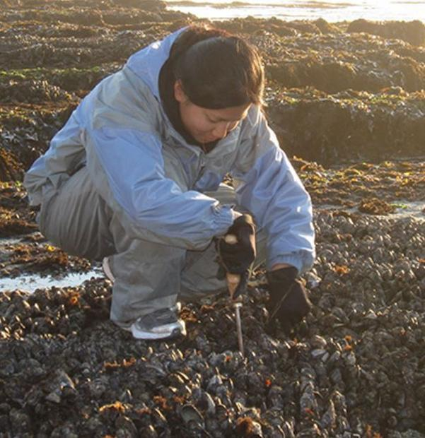 UCSC researcher Kendra Negrey collects mussels for research on the accumulation of freshwater toxins...