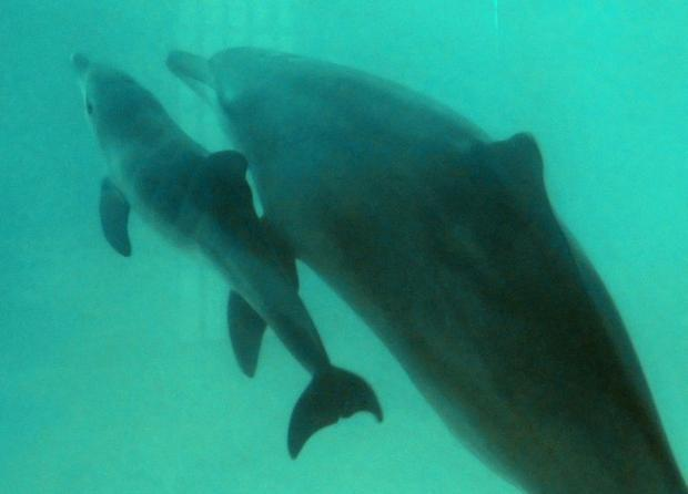 The VR dolphin therapy is designed as an alternative to dolphin-assisted therapies using dolphins in...