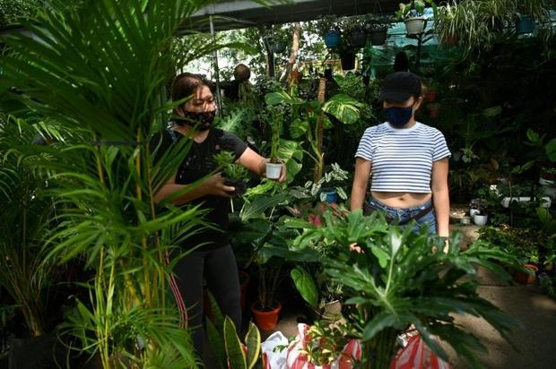 The gardening craze has sent plant prices soaring and led authorities to warn against illegal poachi...