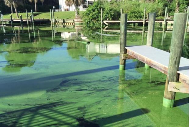 Algae infestation in Florida in 2016.