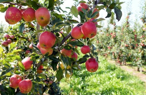 Poland is Europe's largest producer of apples  poultry  raspberries and potatoes -- and is also...