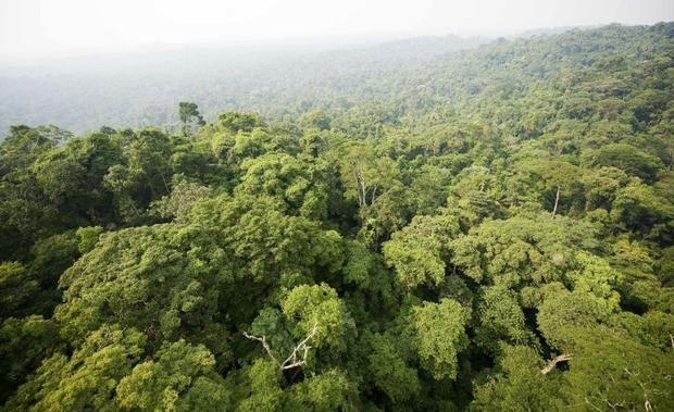 Brazil includes about 60 percent of the Amazon rainforest  the largest in the world and essential in...