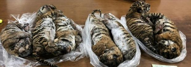 Conservation group Traffic called for action to prevent further tiger losses with fewer than 3 900 o...