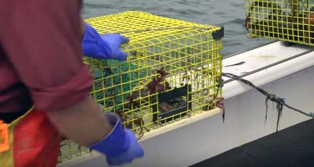Southern New England lobstermen are dealing with dwindling stocks because the lobster population has...