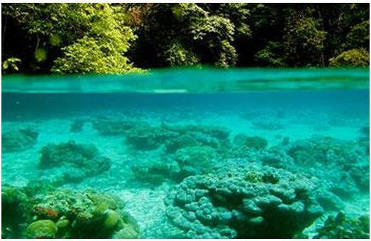 Coral reefs need to grow just below the sea surface so that the corals  symbiotic photosynthetic alg...