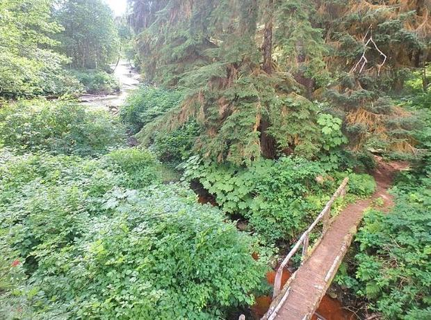Tongass engineers inspected the treated timber viewing tower and the native log (untreated) trail br...